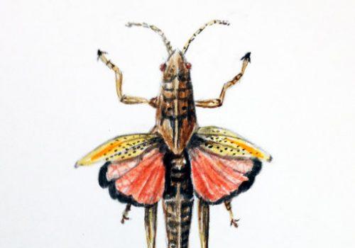 GrasshopperSmall